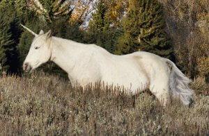 christie bryant unicorn creative photo